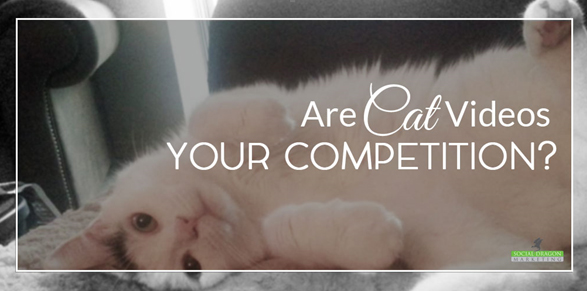Are cat videos your competition?